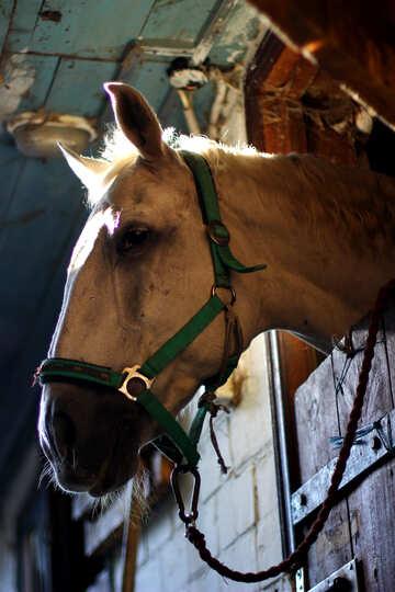 Traurig Pferd №36591