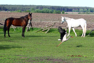 The stork and the horse №36806