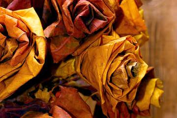 Wallpapers flowers of fallen leaves №36035