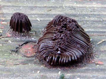 Looks like fungus on wood №36184