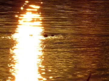 Menschen schweben im Wasser bei Sonnenuntergang №36411