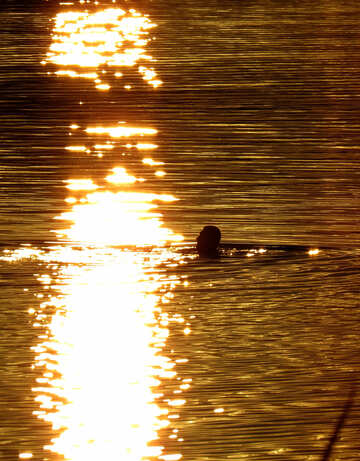 Bathing at sunset №36412