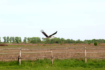 A stork is flying over the fence №36802
