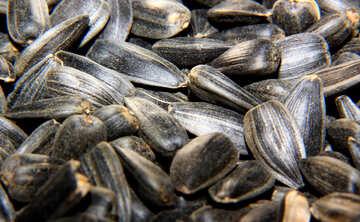 Sunflower seeds №36232