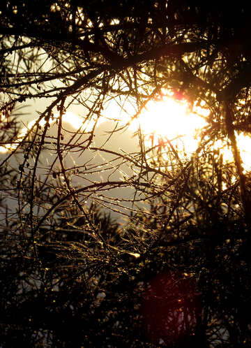 Bosque de noche №36709
