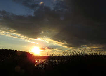 Sunset in the reeds №36417
