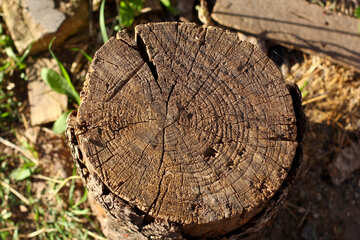 Стаый срез дерева №36890