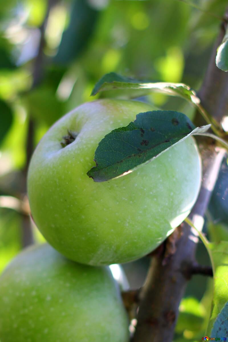 Beautiful Apple №36959
