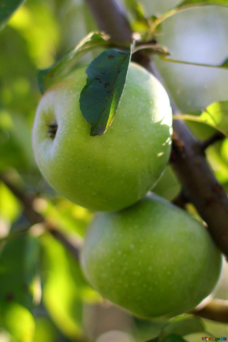 Apples №36956