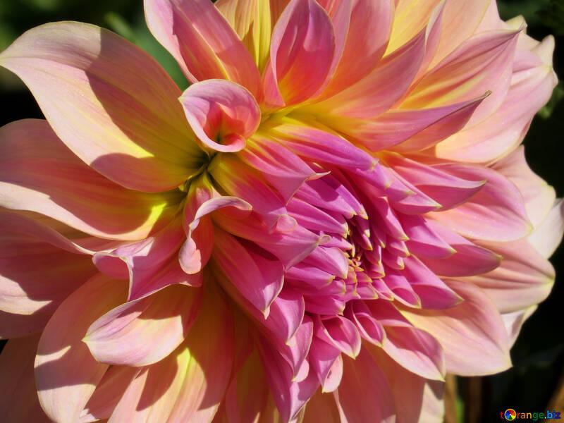 Beautiful flower №36102