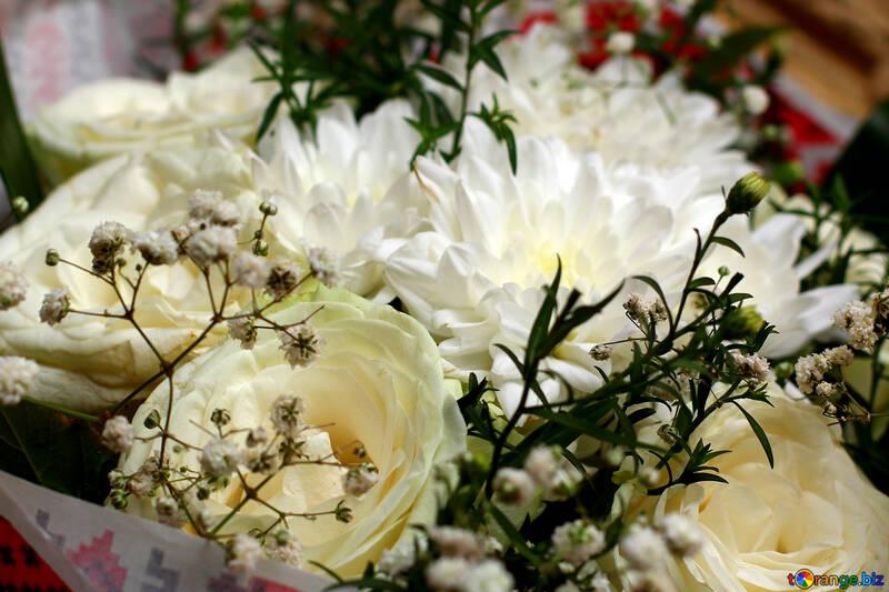 Rosa Bianca Sfondo Di Carta Con Rose Bianche Rosa 36279
