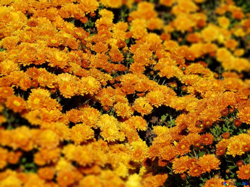 Fondo floral №36913