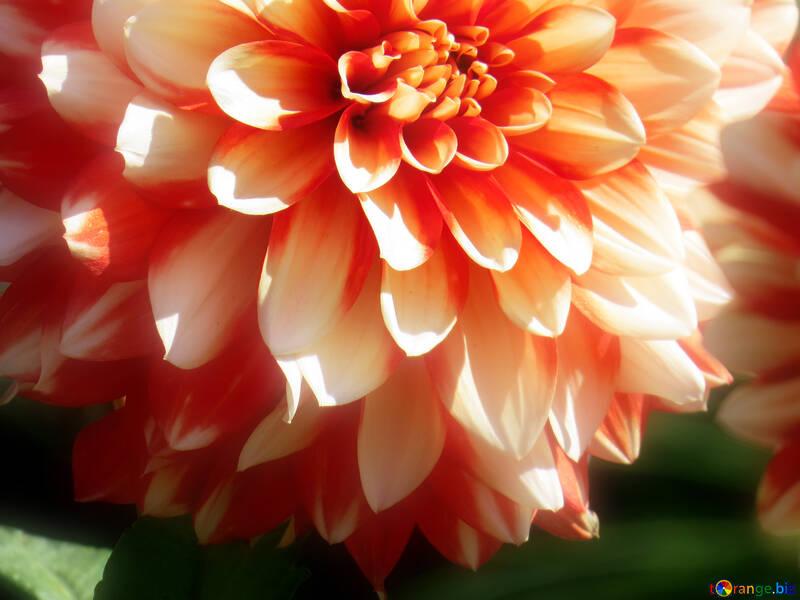Background flower №36092