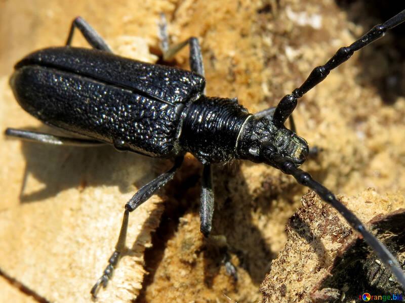 A large black beetle №36356