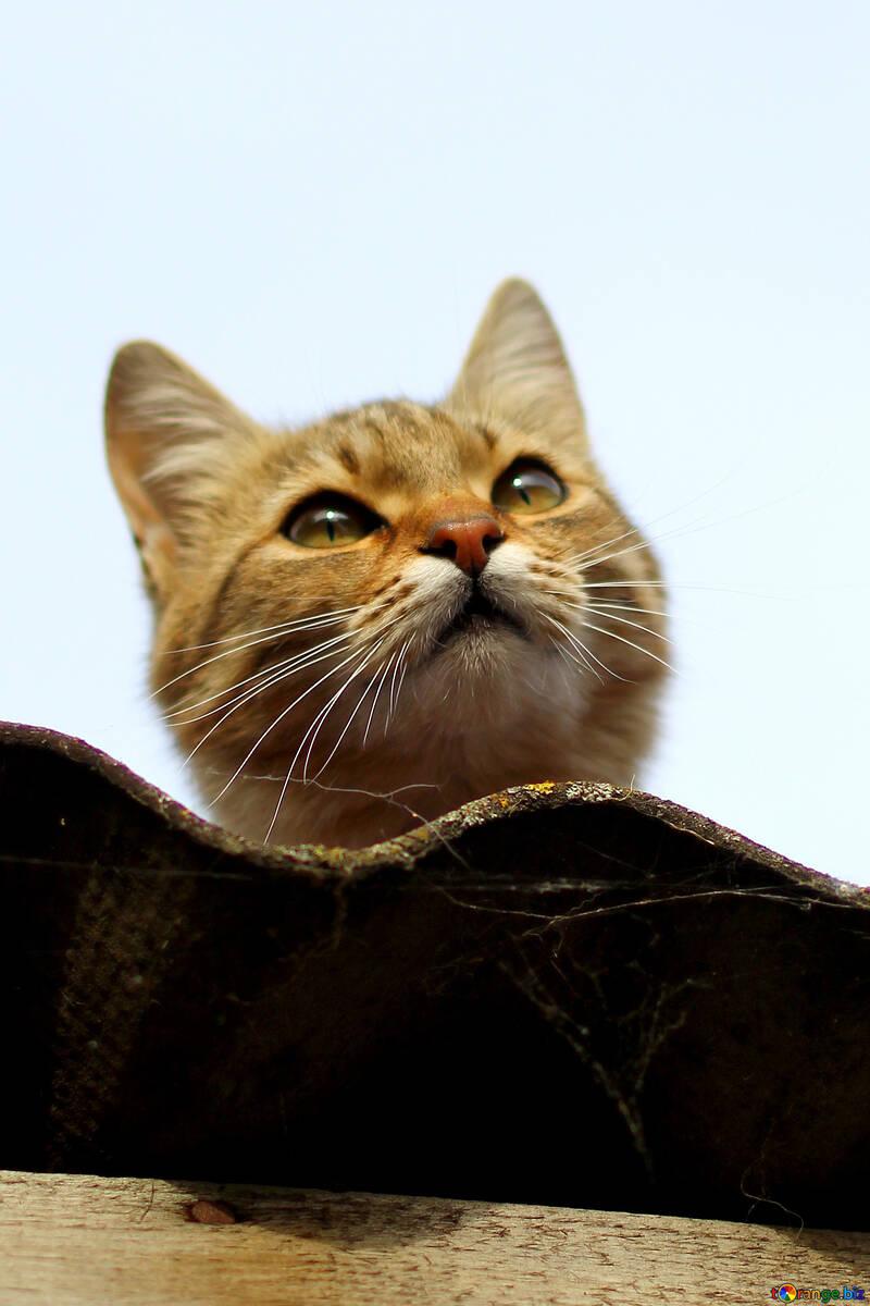 Portrait of the cat №36546