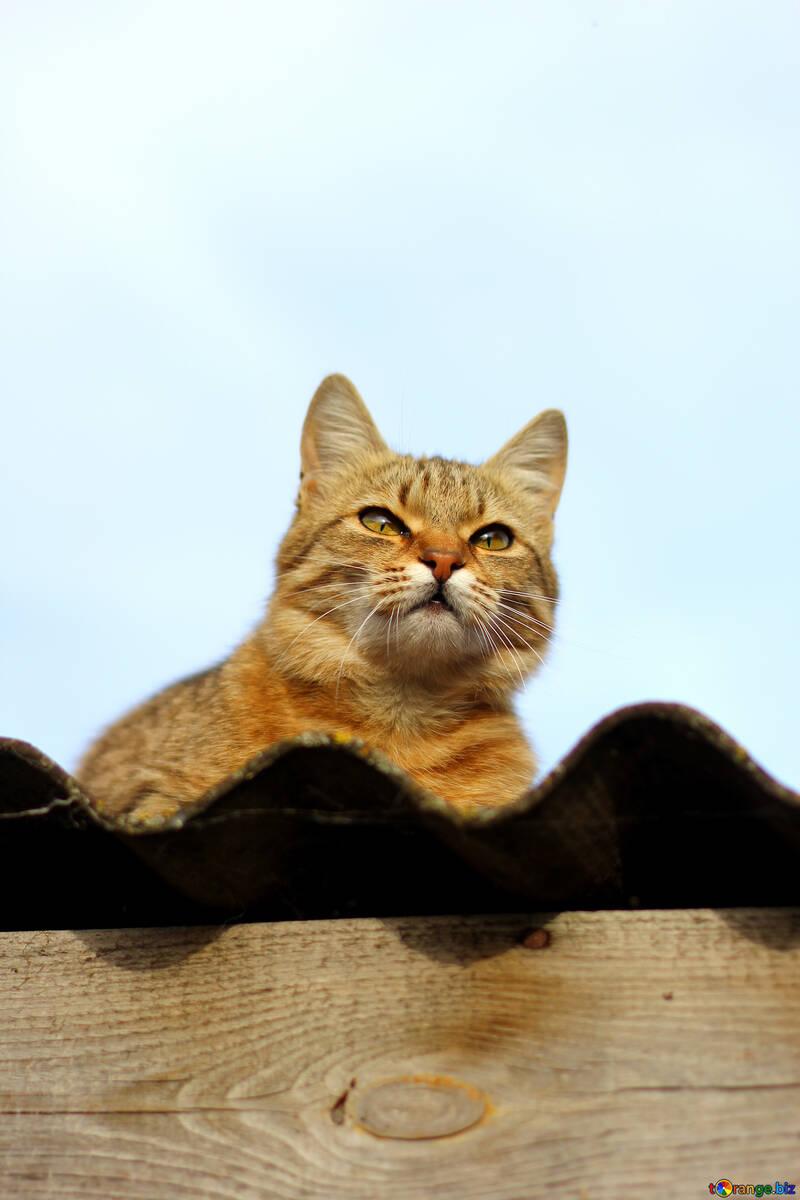 Chat sur le toit №36543