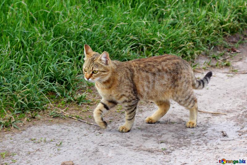 Démarche du chat №36550