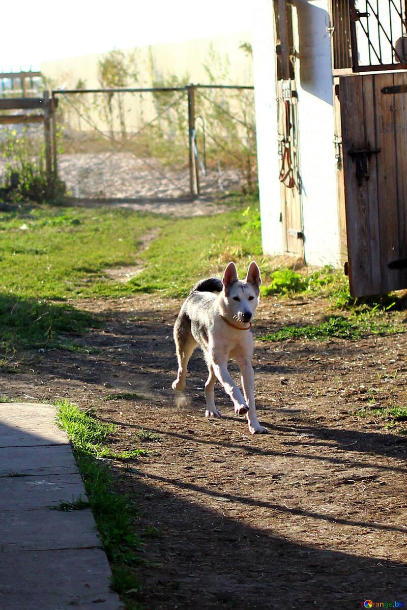 Running dog №36865