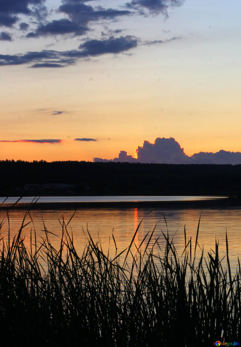 Evening nature №36468