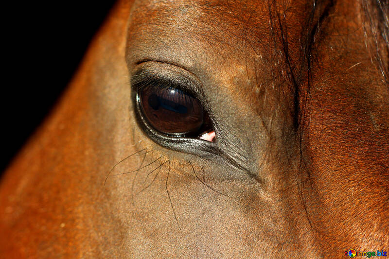Vue chevaux №36573