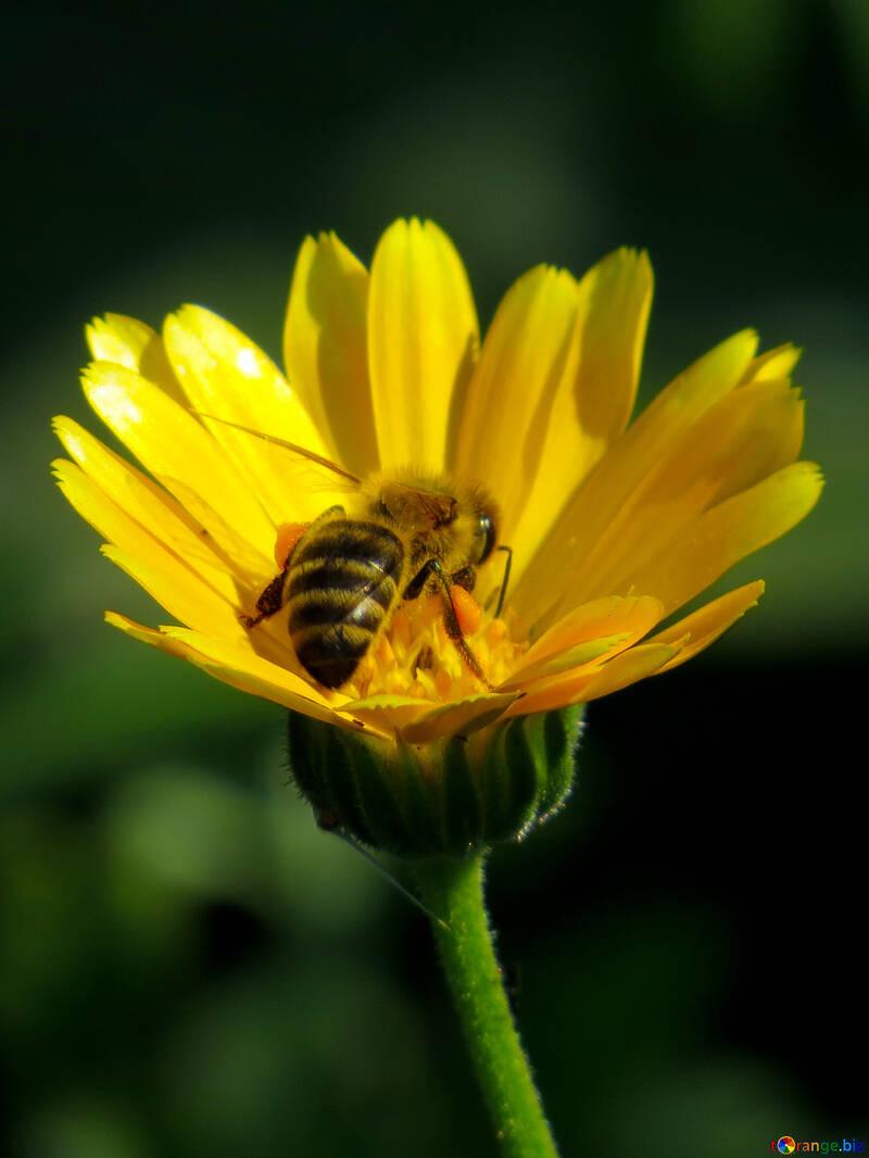 Clicca per salvare le api dai pesticidi!