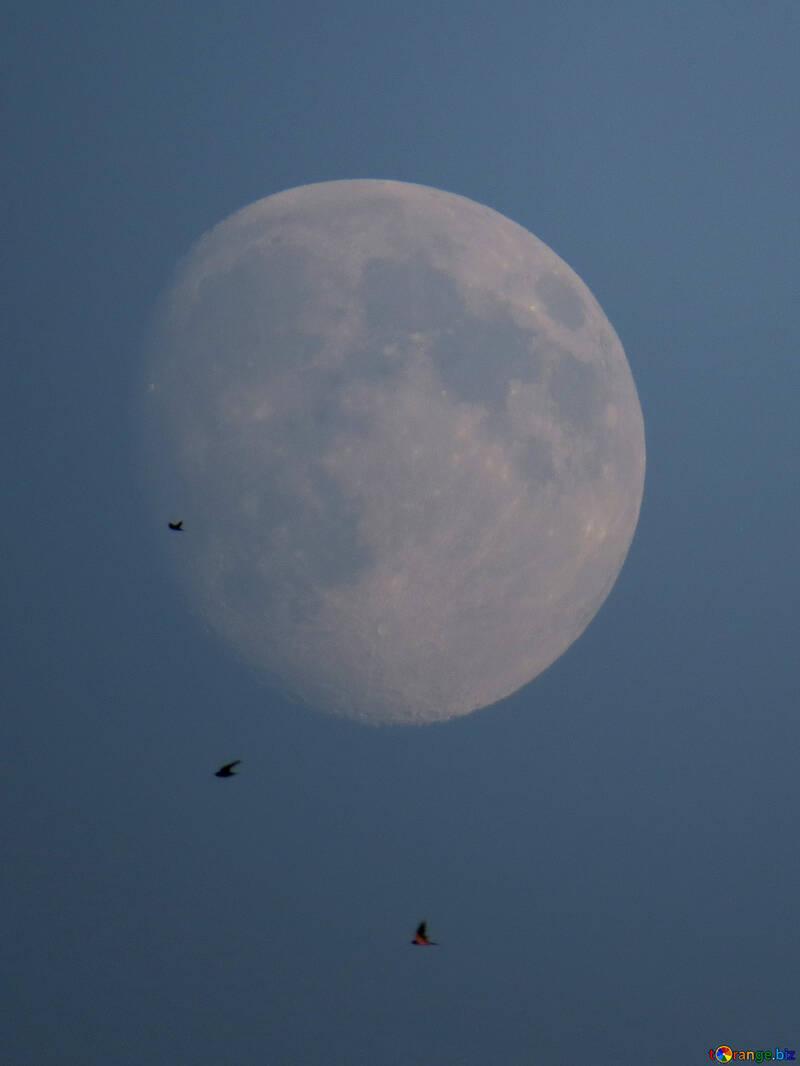 Птицы на фоне луны №36675
