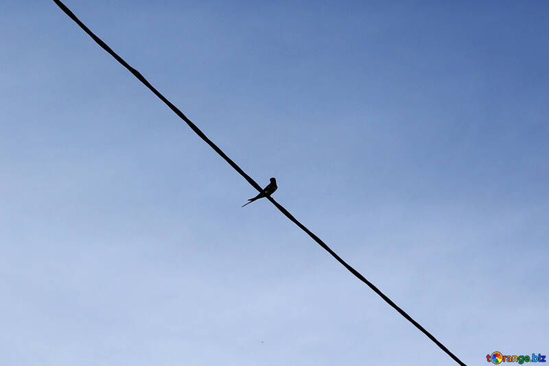Robin sits on wire №36809