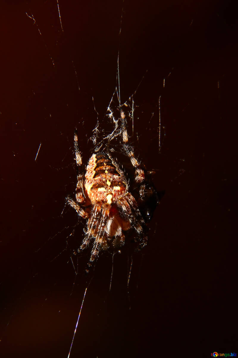 Spider in isolation №36216