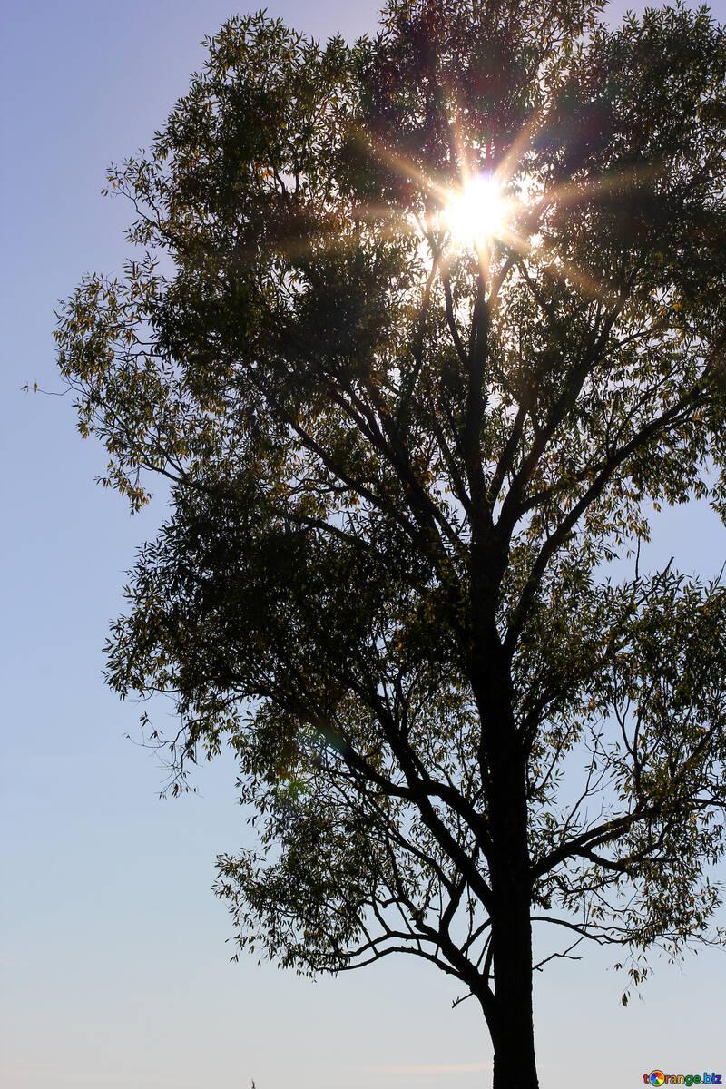 Le soleil dans les branches de l`arbre №36977