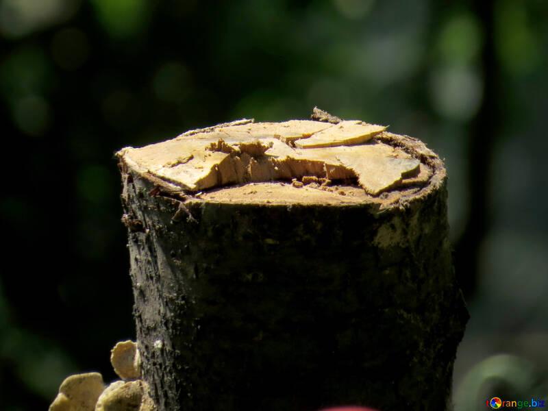 Fallen tree №36176