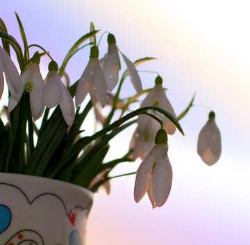 Bouquet for beloved №37975