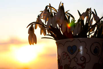A bouquet of spring flowers at sunset №37982