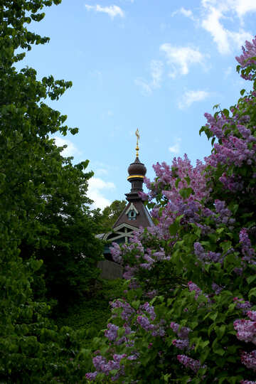 Church in thickets of lilac №37592