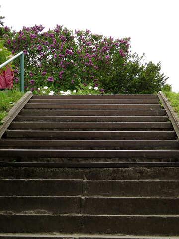 Ladder up №37295