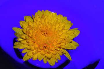 Fiore in acqua №37278