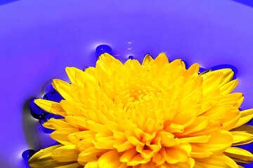 Ukrainian flower №37279