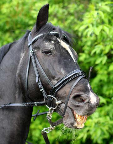 Ride di cavallo №37267