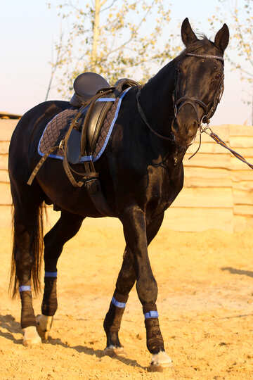 Horse on rope №37236