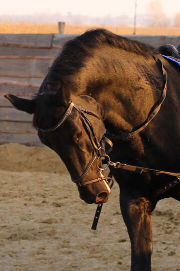 Work horse №37237