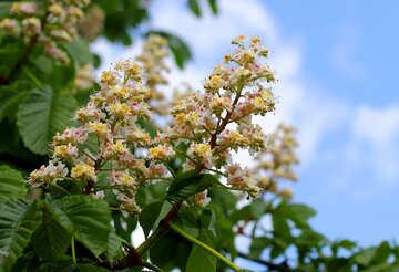 Conker Baum №37627