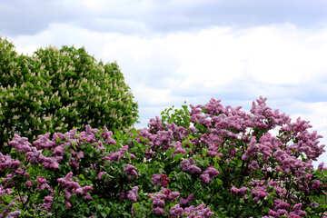 Giardino fiorito in primavera №37469