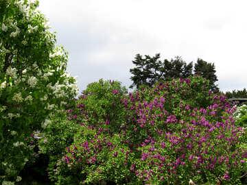 Giardino lilla №37297