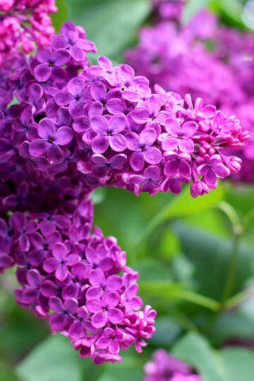 Spring scent №37380