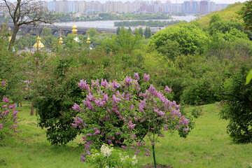 Lilac City Park №37578