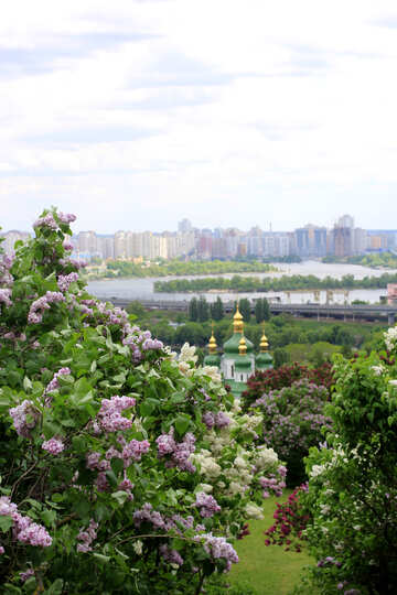 Landscape lilac Kiev №37369