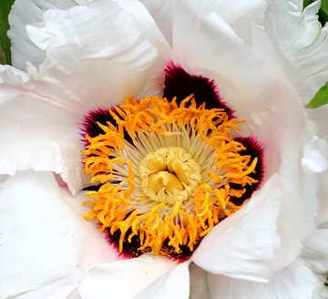 Macro flower №37541