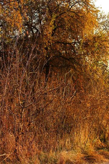 Autumn nature №37223