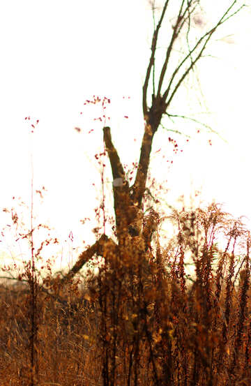 Tree without leaves №37219