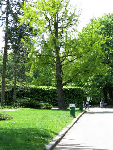 Spring Park №37283