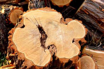 Taglio del legno №37212